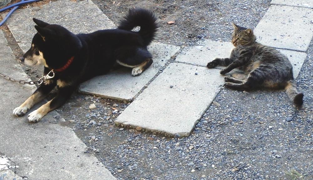 愛犬ラッキーと愛猫ミイ君 いつも仲良しです!