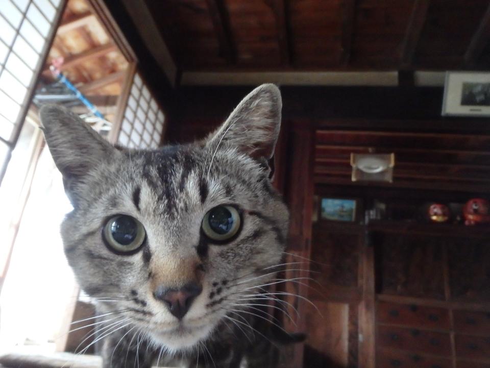 愛猫ミイ君のいる日常 「何か用ですか?」