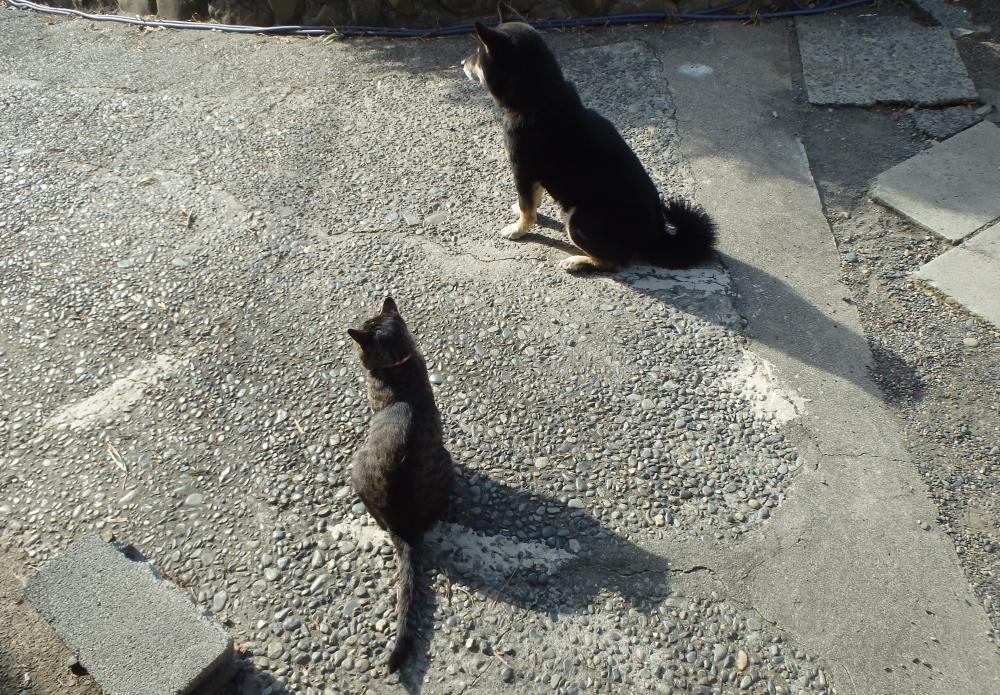 愛犬ラッキーと愛猫ミイ 仲良しコンビです!